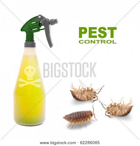 Plastic sprayer with insecticide and The Pill-bugs (Armadillidium vulgare). Pest control concept.