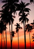 pic of nightfall  - Silhouette of Palm Trees at Sunset - JPG
