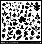 picture of juniper-tree  - Leaf vector silhouettes collection - JPG