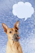 Dog With Speech Bubble