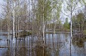 stock photo of boggy  - Trees standing in water during a spring flood - JPG