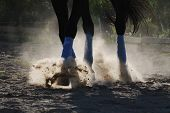 foto of stable horse  - The horse is galloping along the sand - JPG