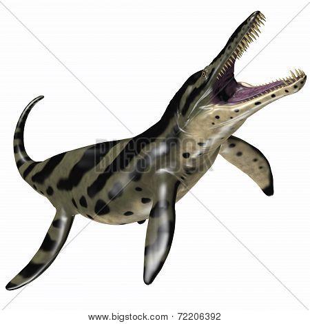 Kronosaurus On White