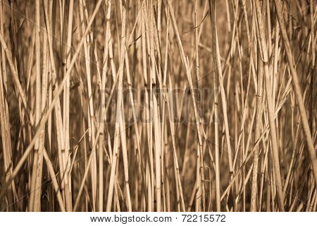 cane dry background