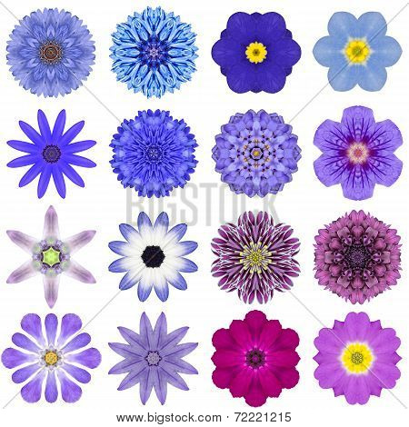 Collection Various Blue Concentric Flowers Isolated On White