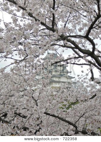 Sakura (cherry blossoms) in the background Himeji Castle