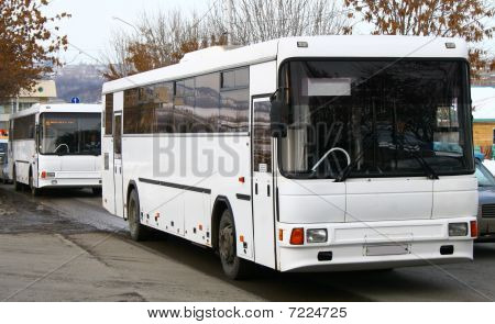 White buses