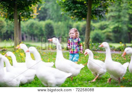Little Girl Feeding Geese