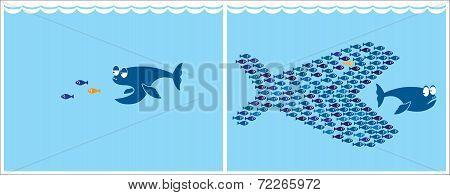 Small Fish