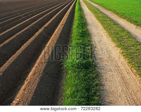 Ploughed Soil Beside Way, Agricultural Background