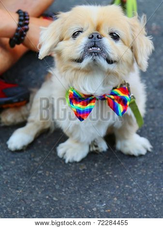 Dog participates at LGBT Pride Parade in New York City
