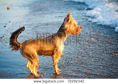 Dog On The Shore Of The Sea Plays In The Water.