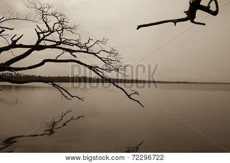 Branches in Lake
