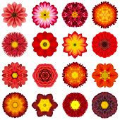 pic of kaleidoscope  - Big Collection of Various Red Concentric Pattern Flowers - JPG