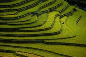 stock photo of rice  - Rice fields on terraced in sunset at Mu Cang Chai - JPG