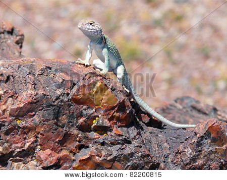 Lizard On Petrified Wood