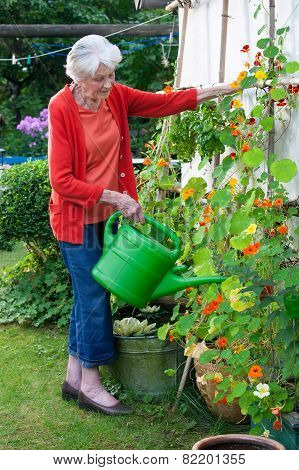 Old Woman Watering Flower Plants At The Garden