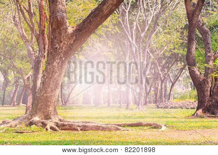 Land Scpae Of Green Tree In Public Park With Flare Light Background Use As Nature Background