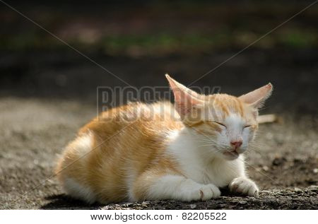 Kitten sitting the ground and closing her eyes to take a rest in urban.