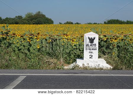 Sunflower Field And Kilometer Stone