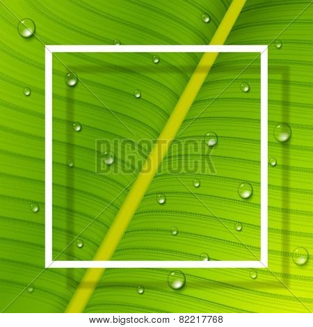 Vector fresh leaf background with white frame