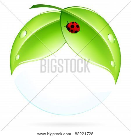 Green Leaves With Ladybird