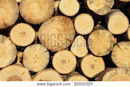 Background of  sawn logs  stacked in the woodpile