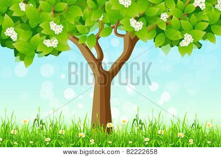 Green Tree In The Grass