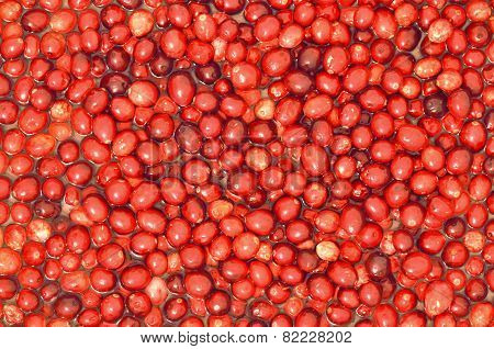 Background of ripe raw cranberries floating in water