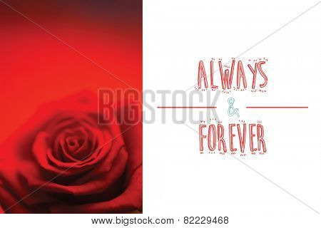 Blurred red rose against always and forever