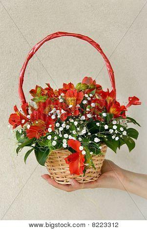 Flowers In Punnet
