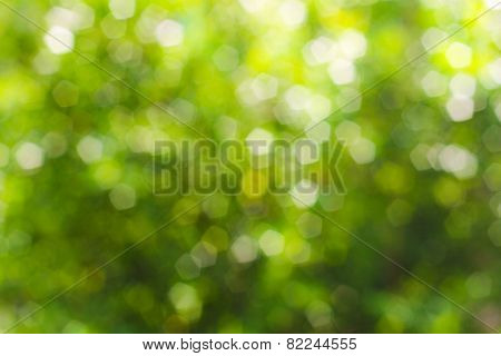 green abstract bokeh, green background