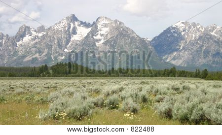 Grand Teton Scenic View with Field