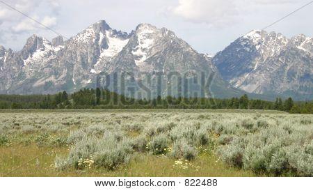 Grand Teton Scenic View with Field