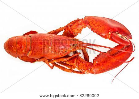 A boiled lobster on a white background.