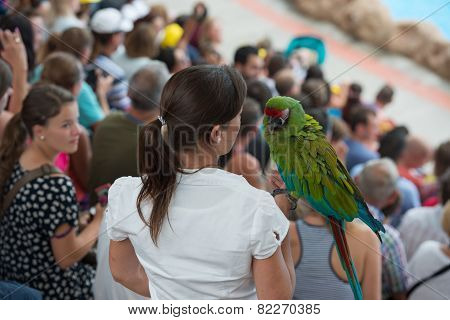 Woman Bird Handler Is Holding Big Parrot On Her Hand.