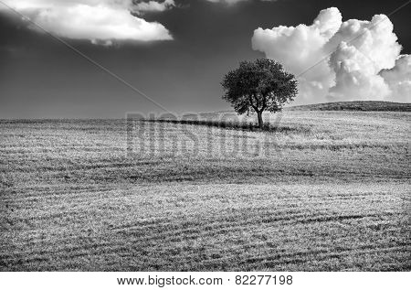 Black and white photo of a lonely tree on the hill, beautiful cloudy sky, wonderful natural landscape, conception of solitude, Tuscany, Italy
