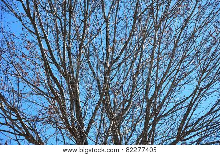 Barren Tree Branches