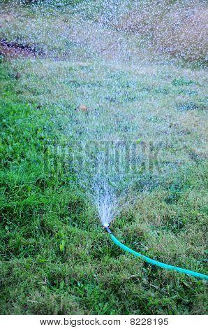Sprinkler Watering The Grass Yard