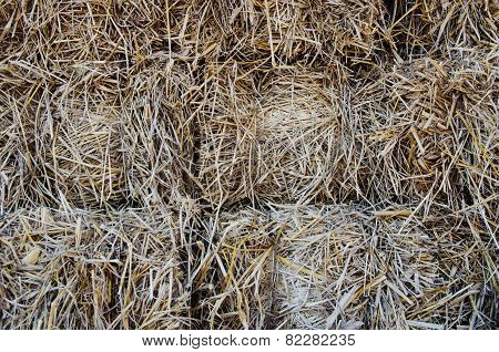 Piles Of Dry Rice Straw