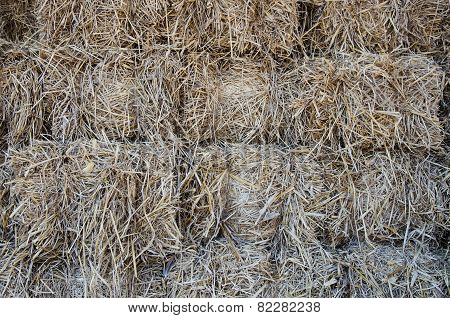 Piles Of Dry Rice Straw