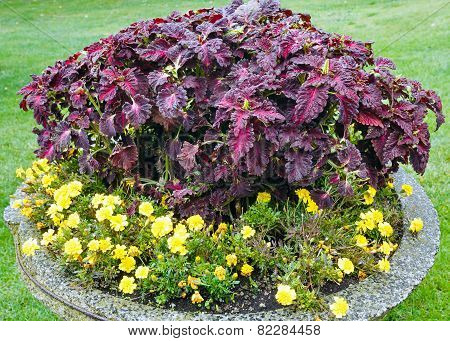 Autumn Flowerbed Composition