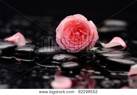 Still life with Pink rose with therapy stones