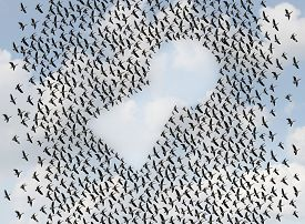 pic of keyholes  - Key to success concept as a flock or group of flying birds shaped as an open keyhole as a metaphor and business symbol for an organization working together to find solutions - JPG