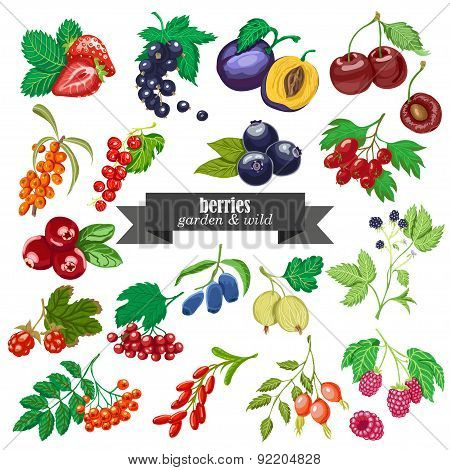 Vector collection of isolated garden and wild berries