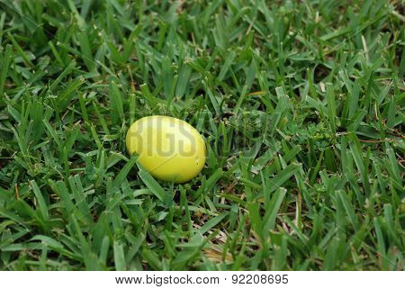 Easter Egg Toy on Grass