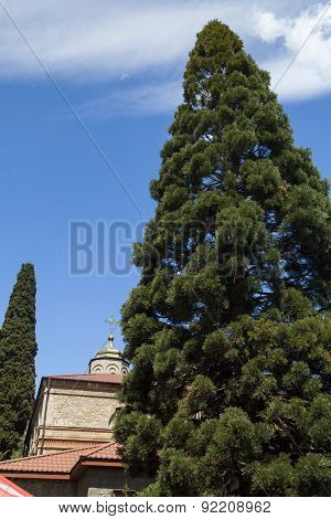 Palm Trees And Cypresses