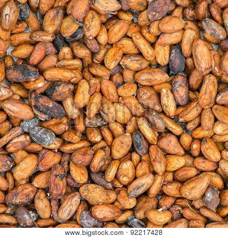 Pattern of the cocoa beans background