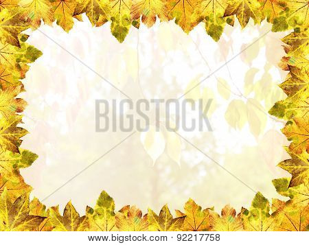 Frame Of  Maple Leaves, Autumnal Colors