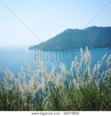 View Of Adrasan Bay. Dry Feather Grass And Sea - Vintage Photo.